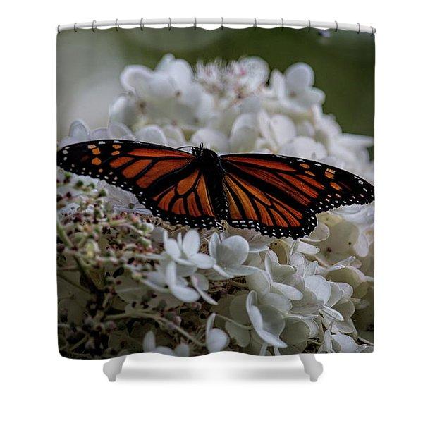 Monarch Butterfly Feeding On Hydrangea Tree Shower Curtain