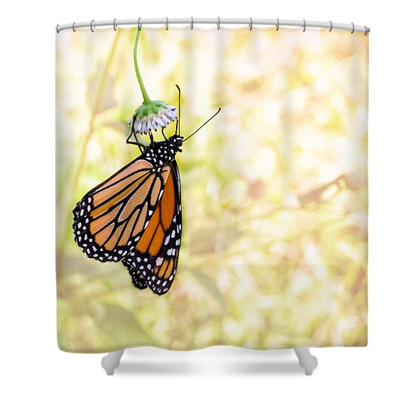 Monarch Butterfly Hanging On Wildflower Shower Curtain