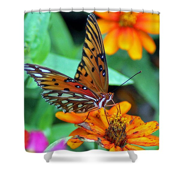 Monarch Butterfly Resting Shower Curtain