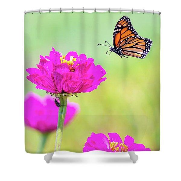 Monarch In Flight 1 Shower Curtain
