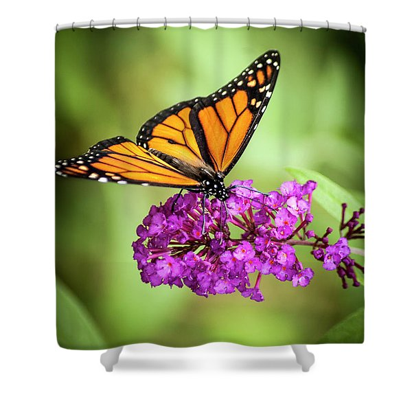 Shower Curtain featuring the photograph Monarch Moth On Buddleias by Carolyn Marshall