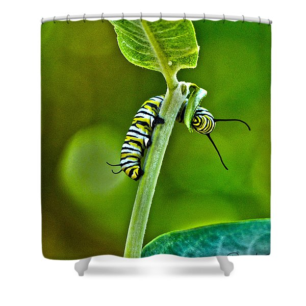 Monarch Munchies Shower Curtain