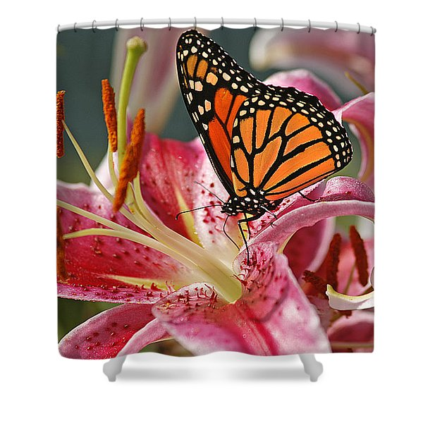 Monarch On A Stargazer Lily Shower Curtain
