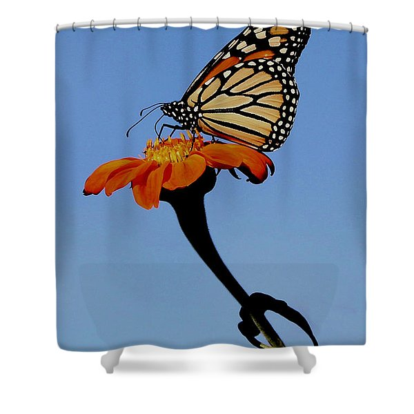 Monarch On Zinnia  Shower Curtain