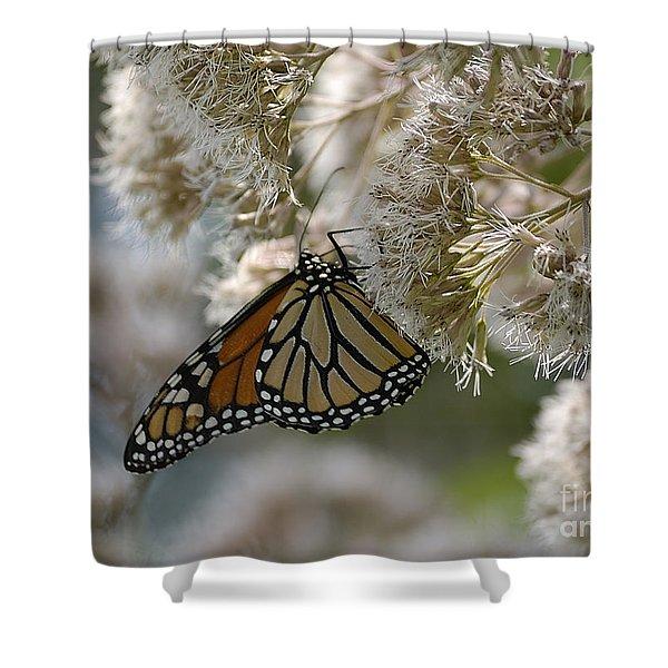 Monarch Pink Shower Curtain