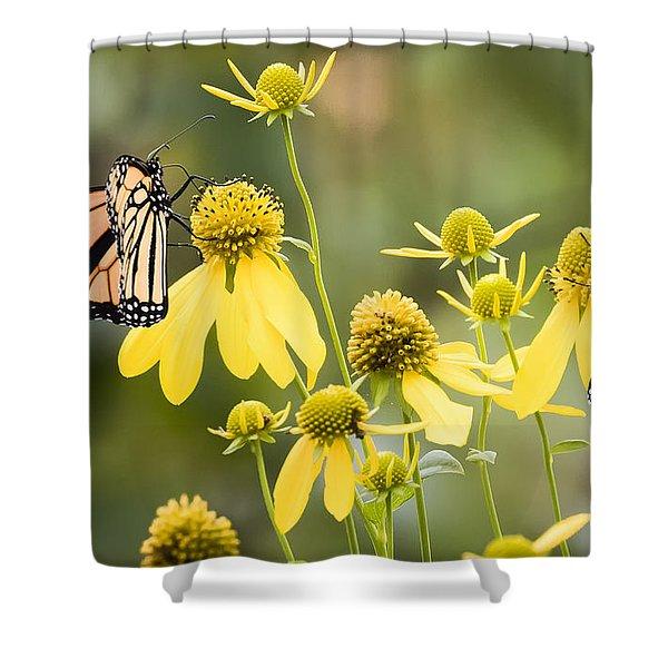 Monarchs Of Wisconsin Shower Curtain