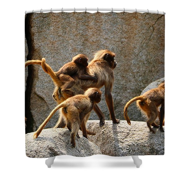 Monkey Family Shower Curtain