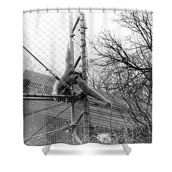 Monkey Grab  Shower Curtain