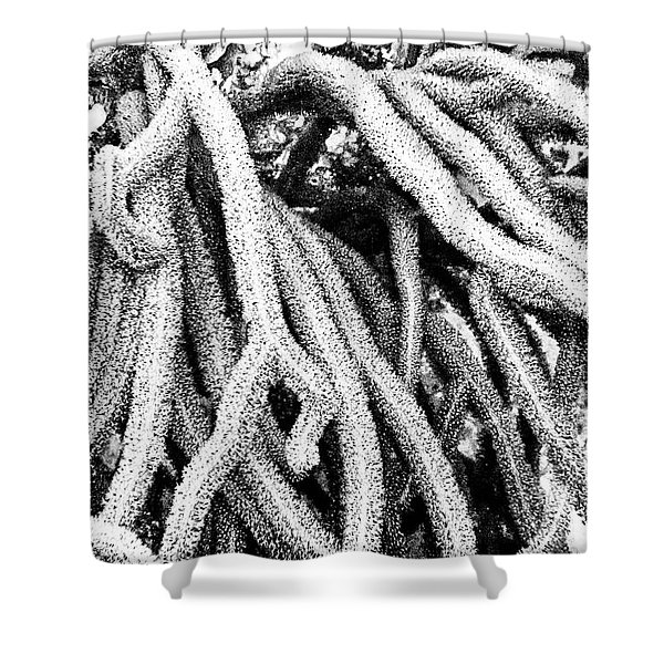 Shower Curtain featuring the photograph Monochromatic Corals 1 by Perla Copernik