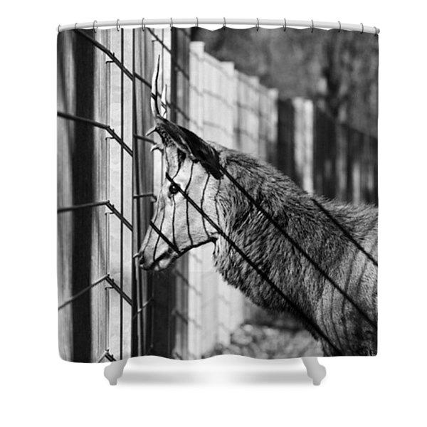 #monochrome #canon #cage #blackandwhite Shower Curtain