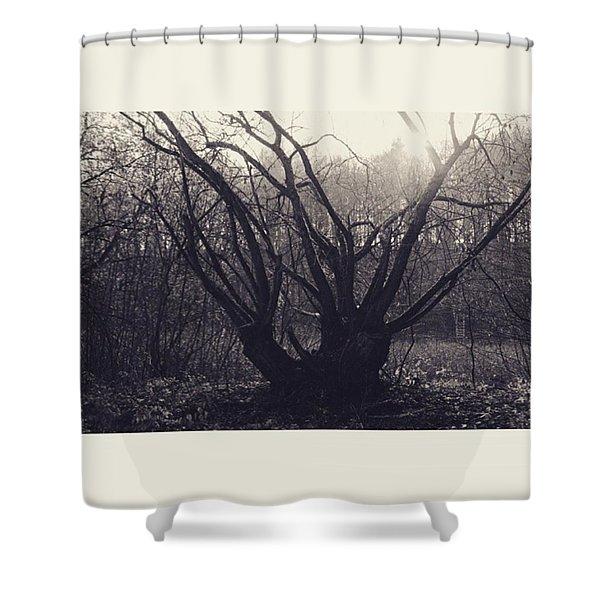 #monochrome #canon #tree #blackandwhite Shower Curtain