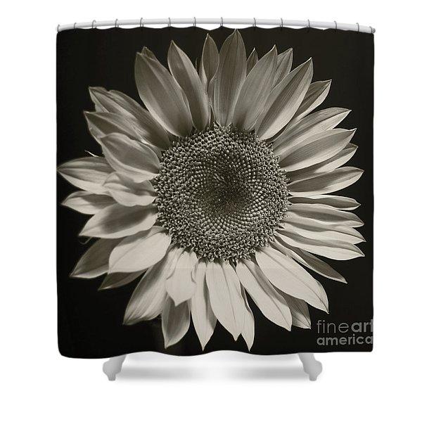 Monochrome Sunflower Shower Curtain