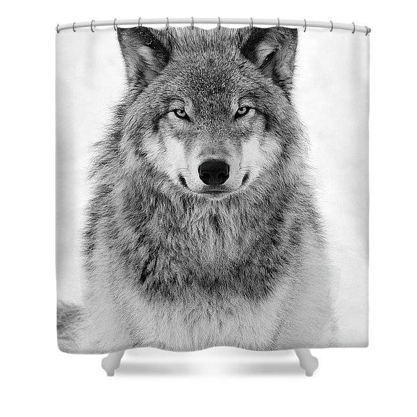 Monotone Timber Wolf  Shower Curtain