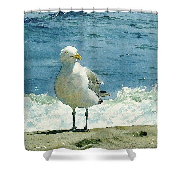 Montauk Gull Shower Curtain