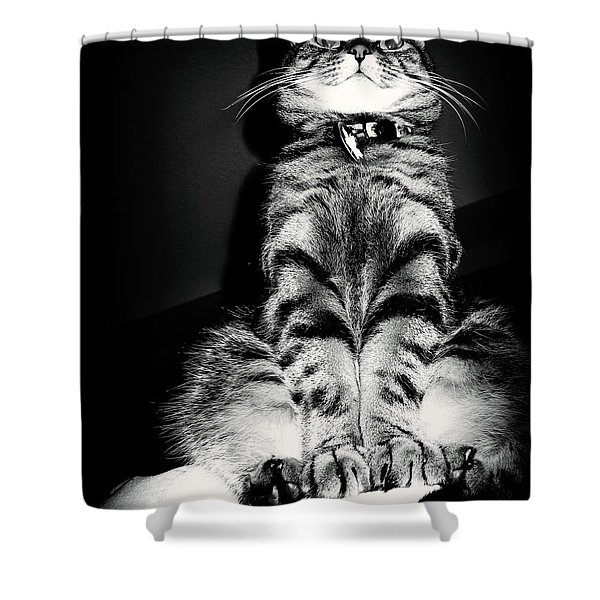 Monty Our Precious Cat Shower Curtain