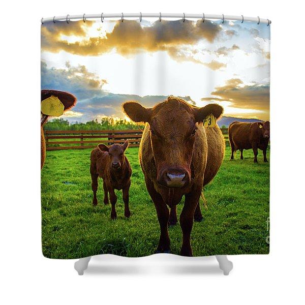 Moo Shower Curtain