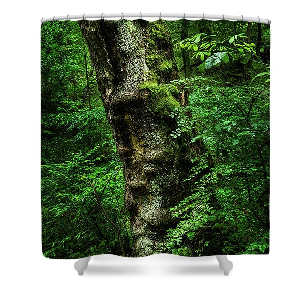 Moody Tree In Forest Shower Curtain