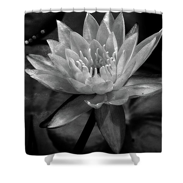 Moonlit Water Lily Bw Shower Curtain