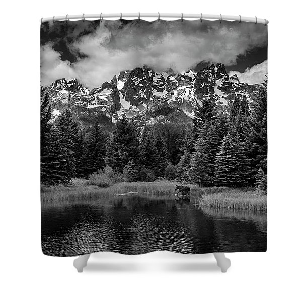 Moose At Schwabacher's Landing Shower Curtain