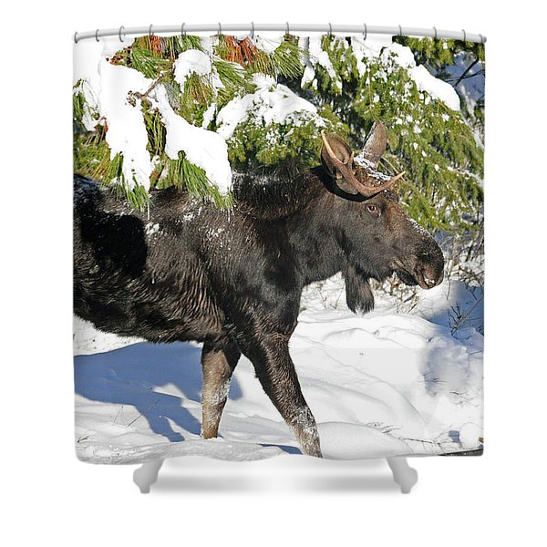 Moose In Snow Shower Curtain