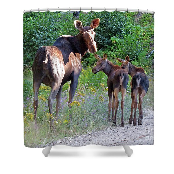 Moose Mom And Babies Shower Curtain