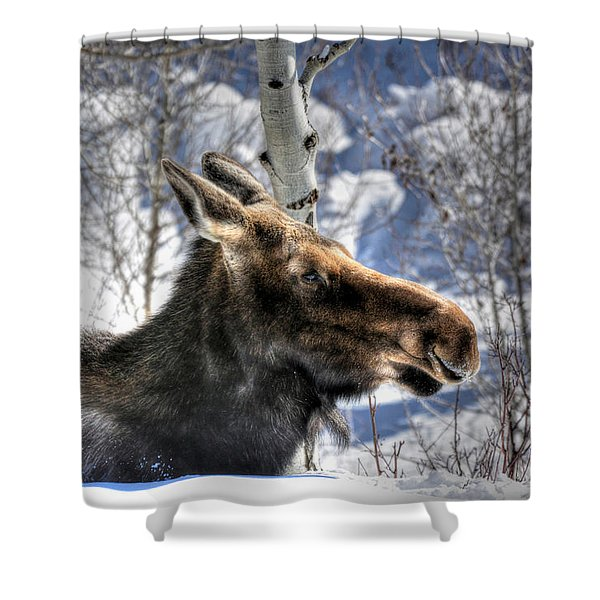 Moose On The Loose Shower Curtain