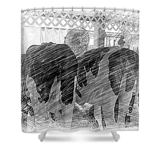 Moo...ving At The County Fair Shower Curtain