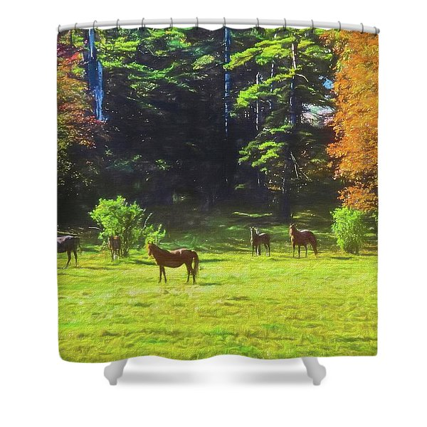 Morgan Horses In Autumn Pasture Shower Curtain