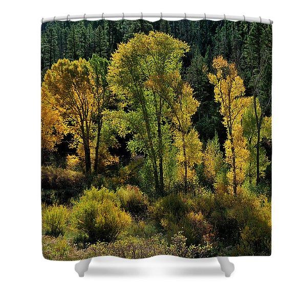 Morning Cottonwoods Shower Curtain