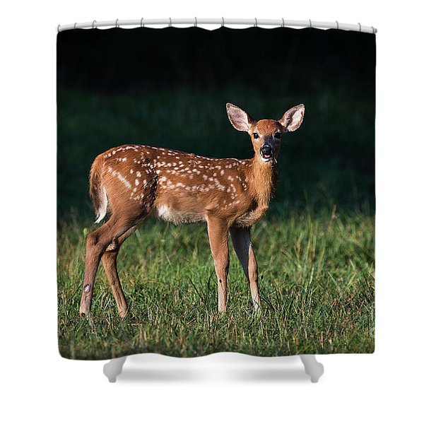 Shower Curtain featuring the photograph Morning Fawn by Andrea Silies