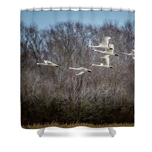 Morning Flight Of Tundra Swan Shower Curtain