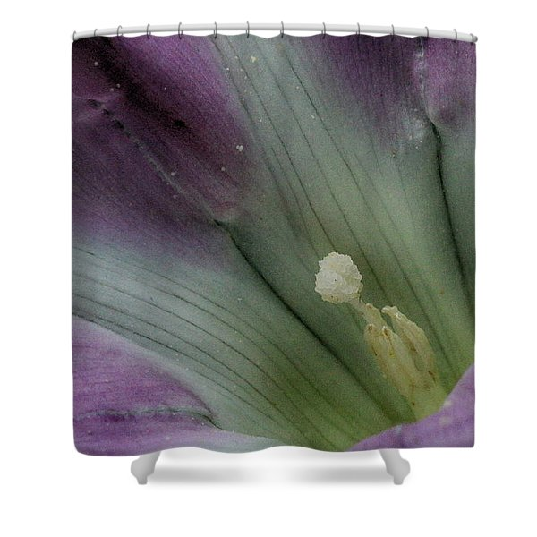 Shower Curtain featuring the photograph Morning Glory Center by William Selander