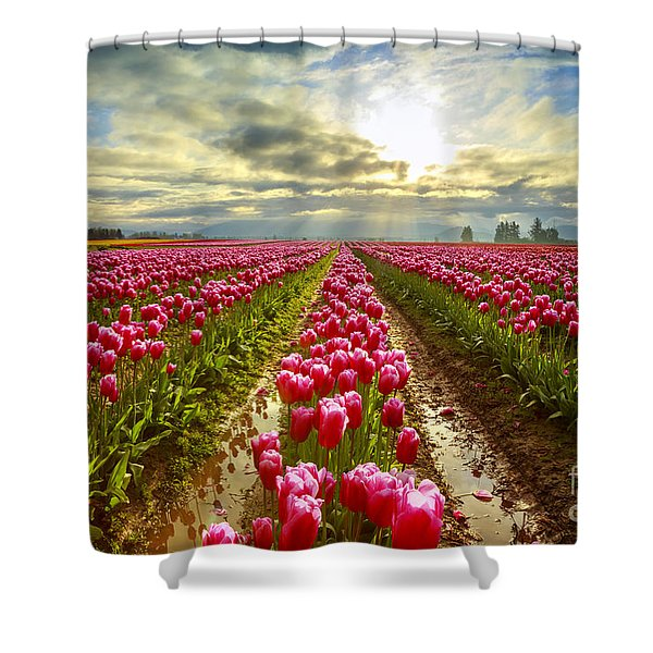 Morning High Shower Curtain