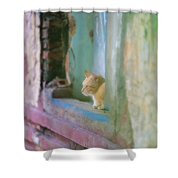 Morning In The Temple A Cats Perspective Shower Curtain