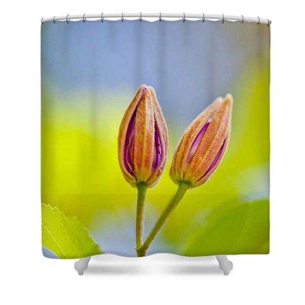 Morning Joy Shower Curtain
