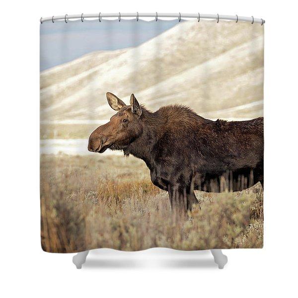 Morning Moose Shower Curtain