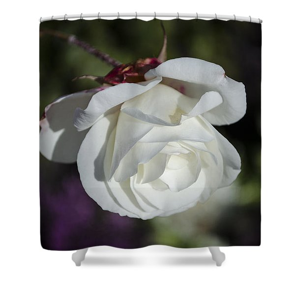 Morning Rose Shower Curtain
