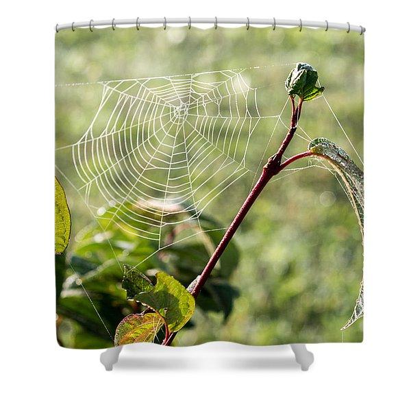 Morning Web #1 Shower Curtain