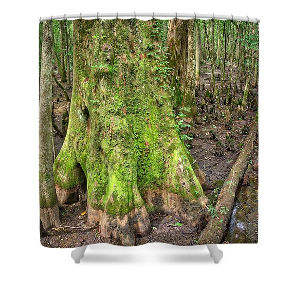Mossy Cypress Shower Curtain