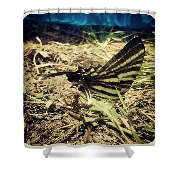 Sunny Moth  Shower Curtain