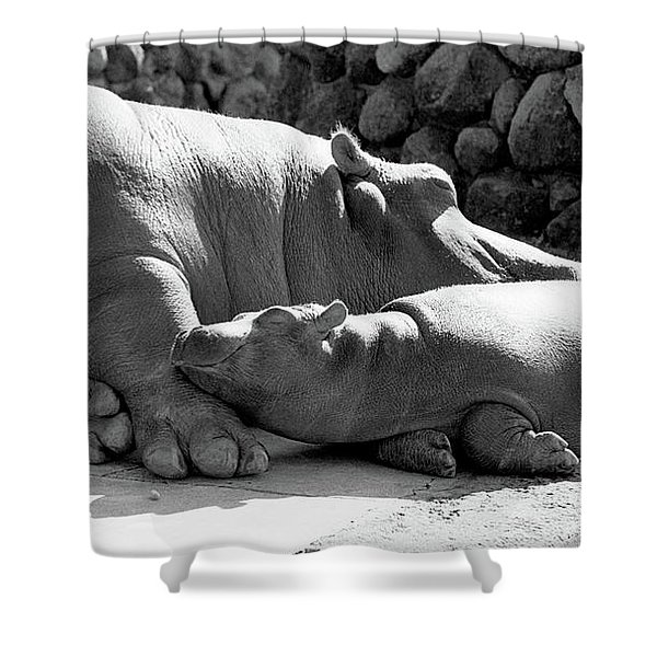 Mother And Baby Hippos Shower Curtain