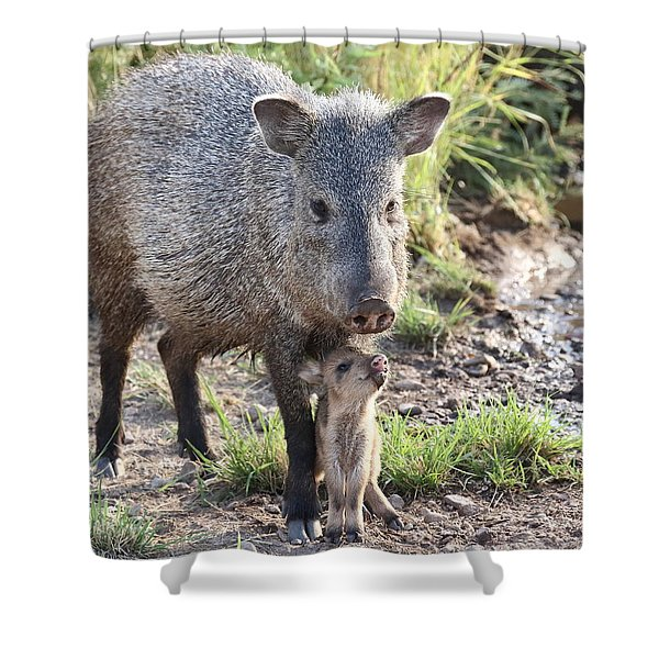 Mother And Baby Javelina Shower Curtain
