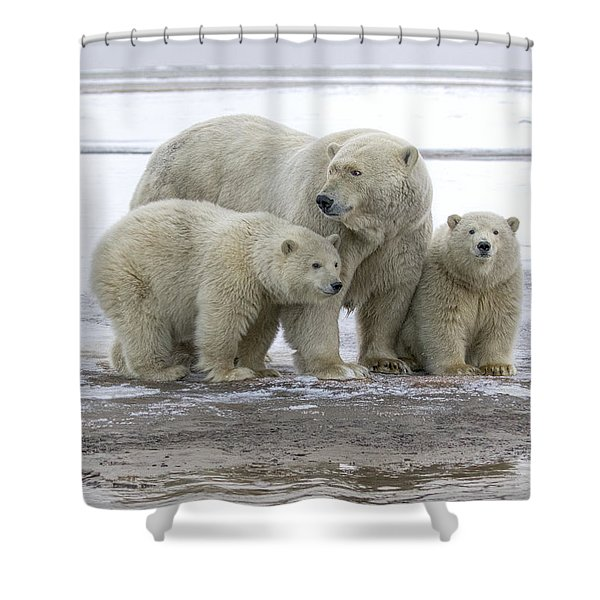 Mother And Cubs In The Arctic Shower Curtain