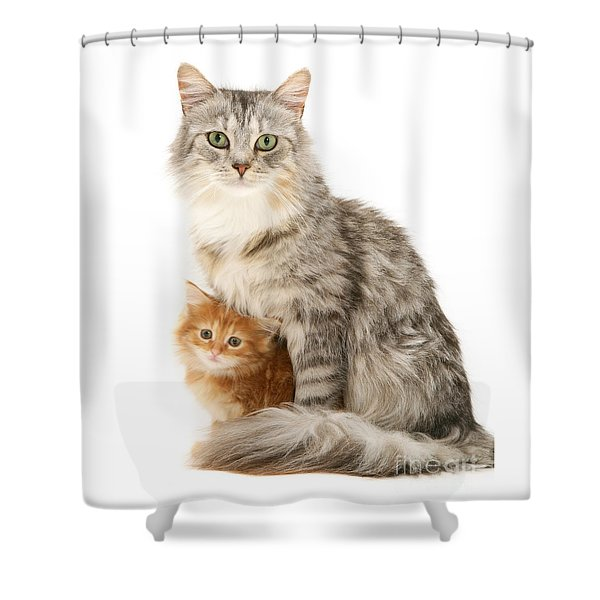 Mother Cat And Ginger Kitten Shower Curtain