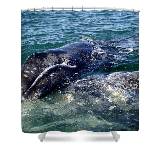 Mother Grey Whale And Baby Calf Shower Curtain