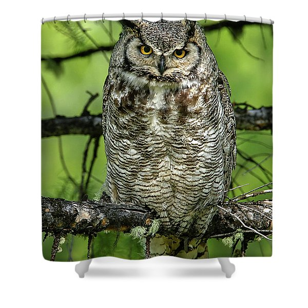 Mother Owl Shower Curtain