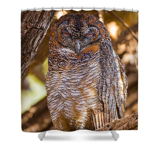 Mottled Wood Owl, India Shower Curtain