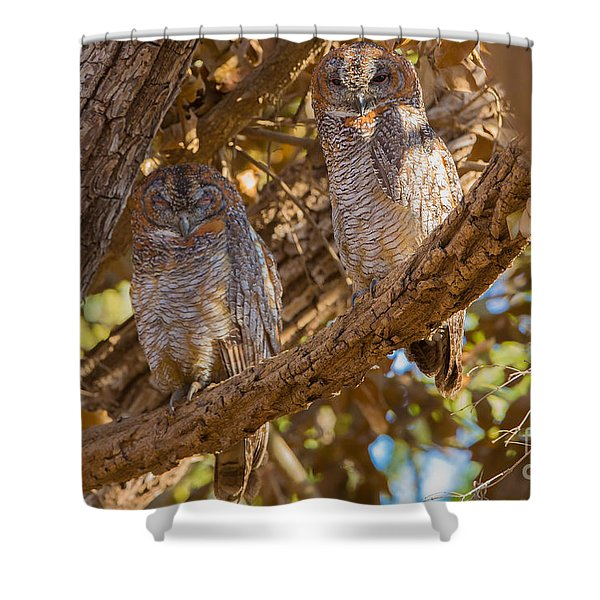 Mottled Wood Owls, India Shower Curtain