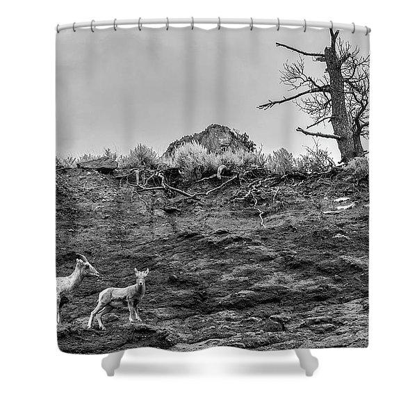 Mountain Goat With A Kid For A Walk Shower Curtain