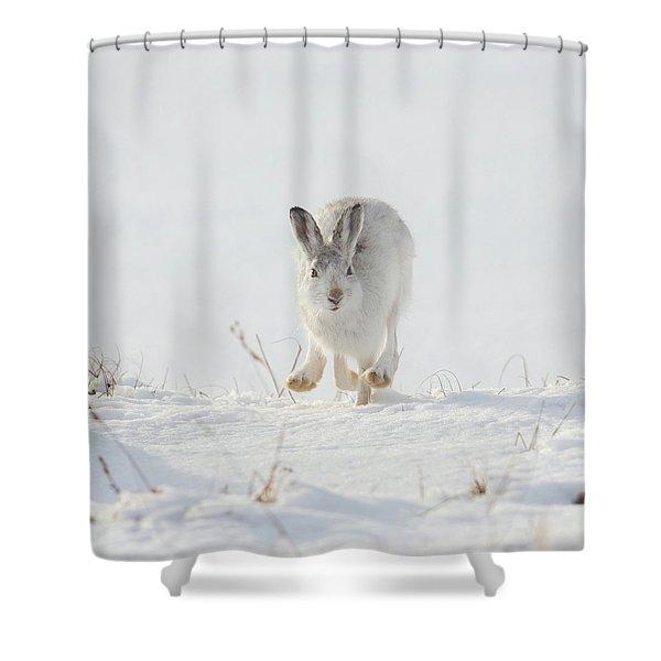 Mountain Hare Approaching Shower Curtain